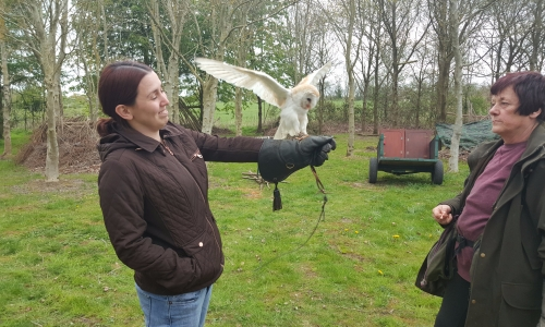 Falconry £35