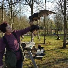 falconry experience derbyshire