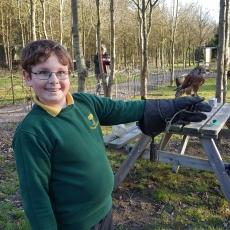 falconry experience midlands