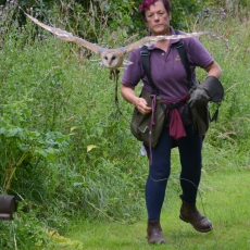 falconry experience stag party